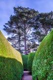 高大的树木和绿色庭院有走道的 库存图片
