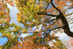 高大的树木在秋天期间 免版税库存图片