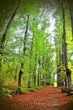 高大的树木大道,路 免版税图库摄影
