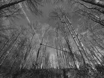 高大的树木广角在黑白照片 免版税库存照片