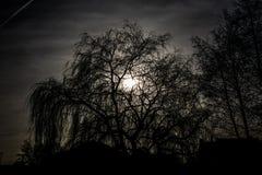 高大的树木的剪影 免版税库存图片