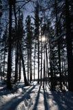 高大的树木的阴影在冬天森林里 免版税库存照片