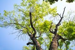 高大的树木 库存图片