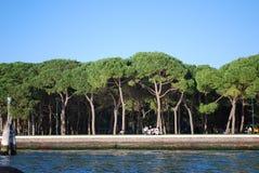 高大的树木 库存照片