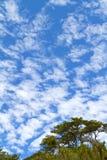 高天空 库存照片