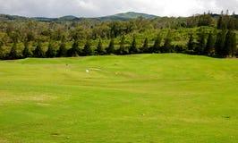 高尔夫球在夏威夷 免版税库存照片