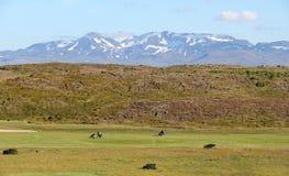高尔夫球场在冰岛。 免版税库存图片