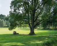 高尔夫球场在锡古尔达,拉脱维亚 与高尔夫球场的风景 图库摄影