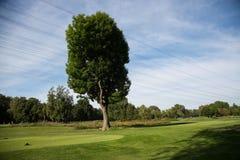 高尔夫球场在阳光下 免版税库存图片