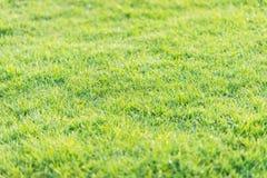 从高尔夫球场的绿草样式日落的蒂姆 库存照片
