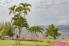 高尔夫球场风景 库存照片