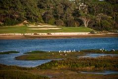 高尔夫球或自然 免版税库存图片