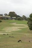 高尔夫球袋鼠 免版税图库摄影