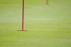 高尔夫球绿色特写镜头 免版税图库摄影