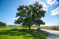 高尔夫车在树荫下 图库摄影
