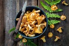 高尚和狂放的黄蘑菇蘑菇在秋天收集了 免版税库存图片