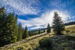 高层云和杉木 库存图片
