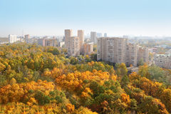 高层建筑物和黄色结构树在公园 库存照片