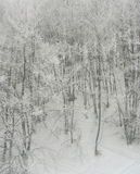 高山冬天森林 库存照片