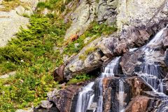 高山岩石风景,野生生物,高Tatras,斯洛伐克 免版税库存照片