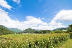 高山市木拉在晴朗的夏天或春日和蓝天美好的风景在Kamitakai区在东北长野 免版税图库摄影