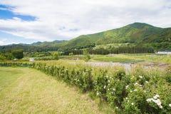 高山市木拉在晴朗的夏天或春日和蓝天美好的风景在Kamitakai区在东北长野 库存照片