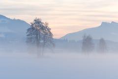 高山日落和斯诺伊领域 免版税库存图片