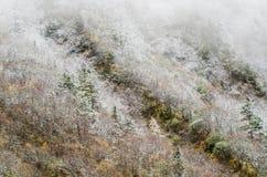 高山森林,盖由多雪的树冰,黄龙 图库摄影