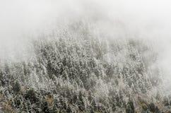高山森林,盖由多雪的树冰黄龙, Ch 库存图片