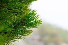 高山森林 库存照片