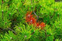 高山森林 免版税库存照片