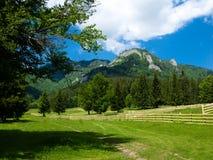 高山横向罗马尼亚 免版税图库摄影