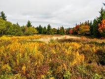 高山沼泽移动式摄影车草皮,西维吉尼亚U S A 在秋天 免版税库存照片