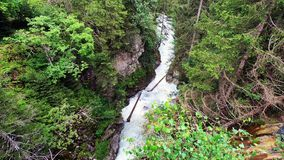 高山溪和松树 股票视频