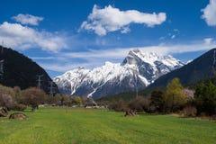 高山牧场地在西藏 免版税库存图片