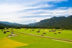 高山牧场地 免版税图库摄影