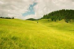 高山美丽的草绿色草甸 库存图片