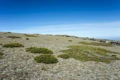 高山草原和被填塞的草丛 免版税库存图片