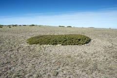 高山草原和被填塞的草丛 免版税库存照片