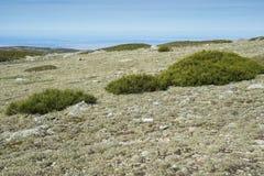 高山草原和被填塞的草丛 库存照片