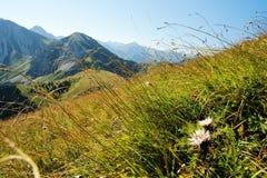 高山草甸。 库存图片