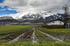 高山草甸和山在一个晴朗的冬日 图库摄影