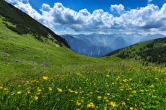 高山草甸开花夏天山风景 奥地利,提洛尔, Achensee地区 库存图片