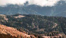 高山草甸,高加索的山 免版税库存图片