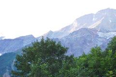 高山落矶山脉和树 库存照片