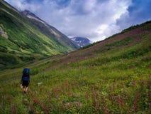 高山远足在阿拉斯加 免版税库存照片
