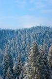 高山雪结构树 免版税库存照片