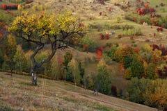 高山风景在国家公园Retezat 库存图片