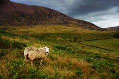 高峰区国家公园英国 图库摄影
