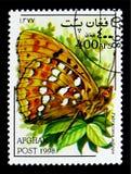 高布朗贝母Farbriciana adippe,蝴蝶serie,大约1998年 库存图片